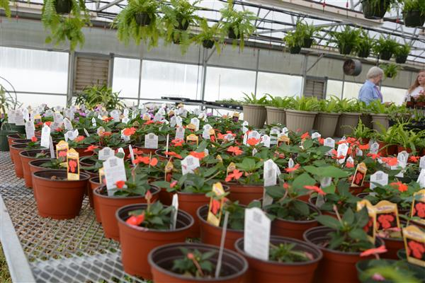 SPHS Horticulture Department to hold plant sale