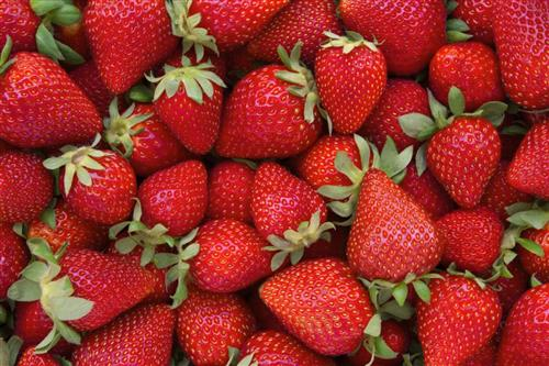 South Panola FFA taking orders for strawberries